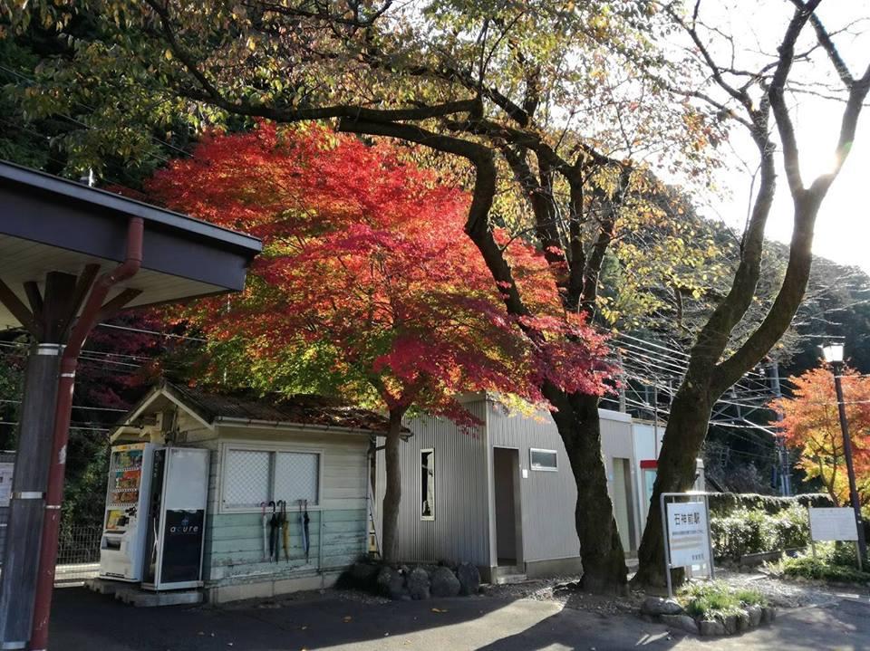 11/17-東京の紅葉の中で体験:のんびり田舎気分でSDGsカードゲーム
